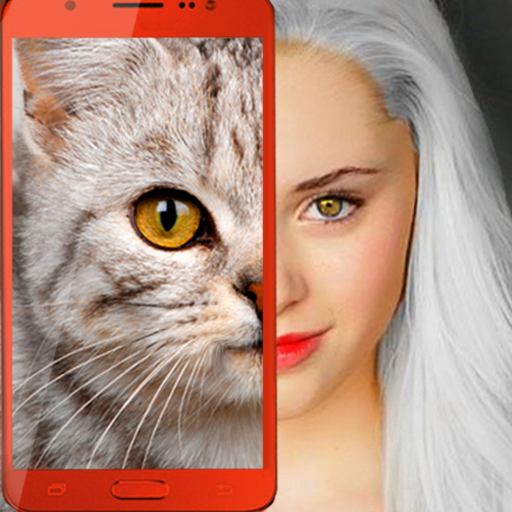 Kittens what cat are you prank 2.7 APK MODs Unlimited money Download on Android